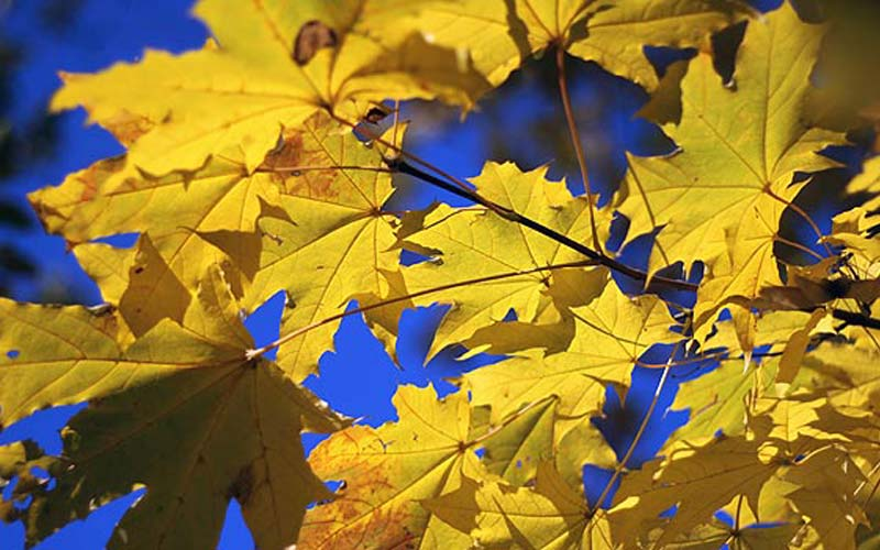 Indian summer cottage rentals during the autumn shift