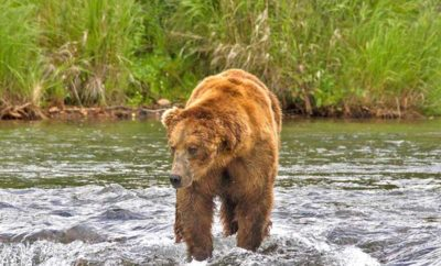 Bears are no joke, be alert and know what to do!
